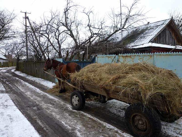 Pferd mit Heuwagen