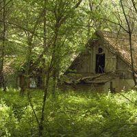 Region-von-tschernobyl-09