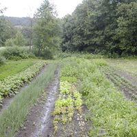 Gagarina-farm-003