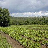 Gagarina-farm-005